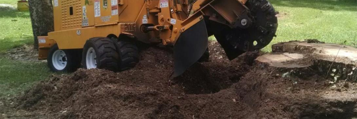 Permalink to: Stump Grinding